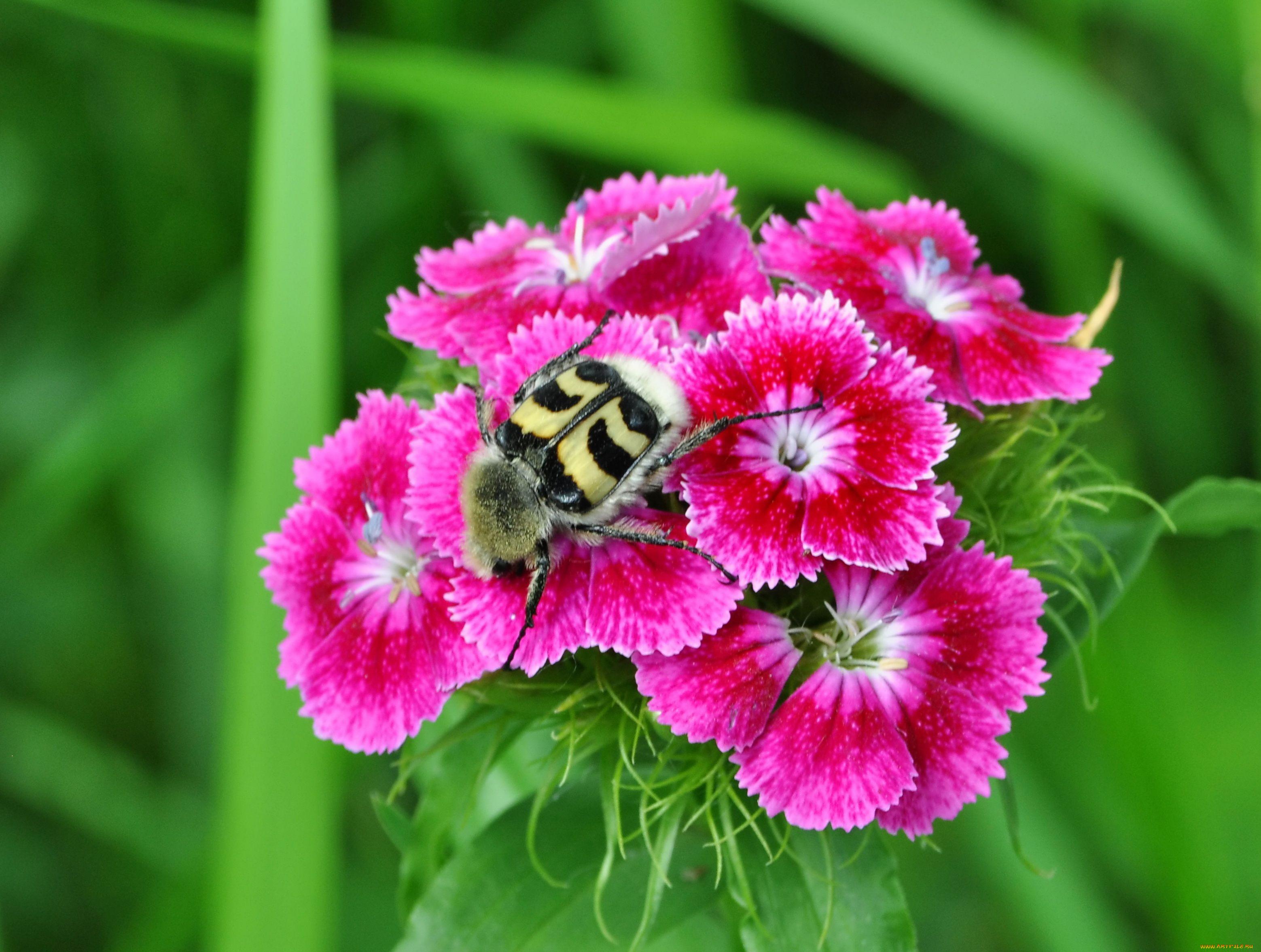 фото животных с цветами гвоздики история так